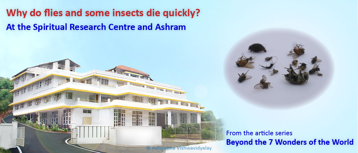 How to get rid of flies – A possible spiritual solution